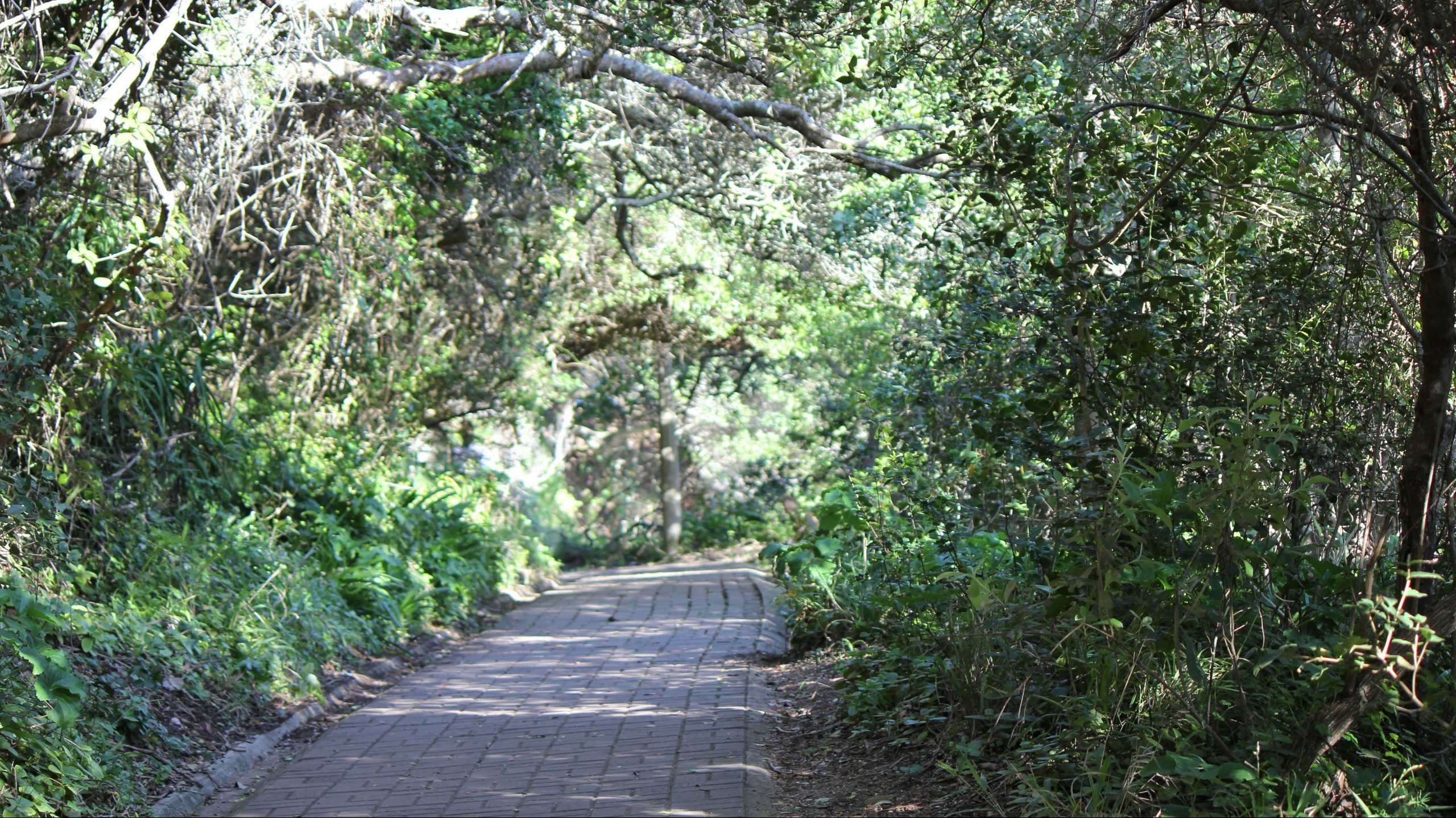 Knysna Head Path